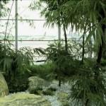 bamboo_garden